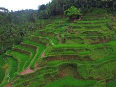 Indonesie vakantie