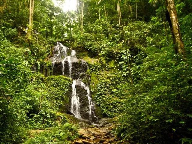 Suriname natuur