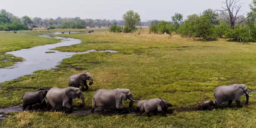 Botswana safari vakantie