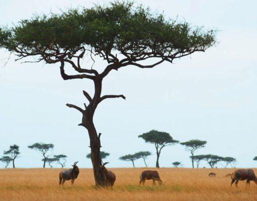 Kenia Serengeti