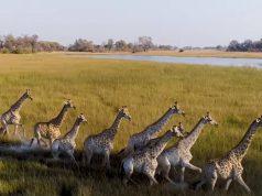 Botswana vakantie