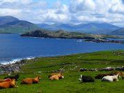 Ierland vakantie