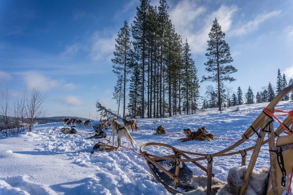 Finland Ruka-Kuusamo husky